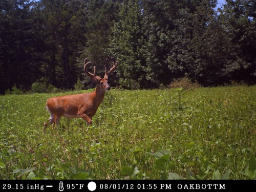 game trail camera