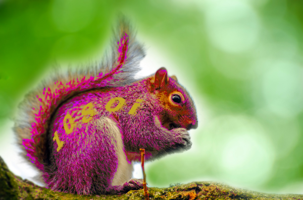 purple 1080i squirrel
